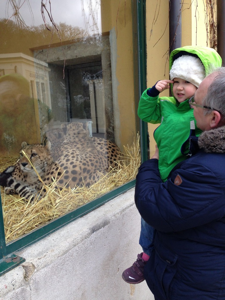 Маша и леопарды, Маша поправила дедушку